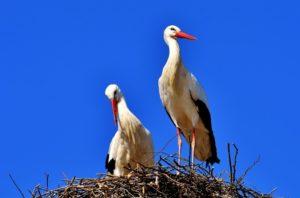 Un nid avec une cigogne qui semble veiller sur un oeuf