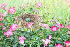 Un nid contenant un oeuf est posé au milieu de fleurs des champs